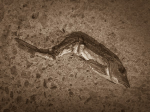 Fish, Overstrand, May 2013