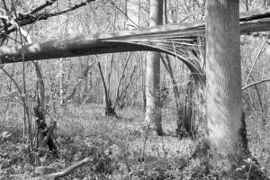 Waresley Wood, April 2014