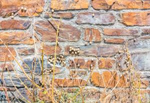 Snails 1, Trebetherick, Cornwall, July 2014