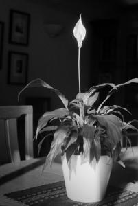 Light 48
