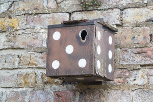 Burton Agnes, bird box, 160618