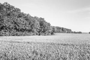 Beechwoods 160701-5
