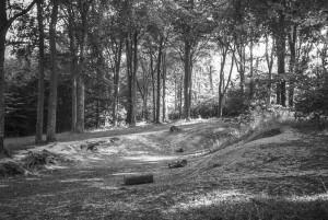 Beechwoods 160701-9