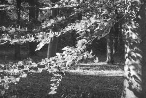 Beechwoods 160801-26