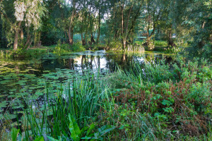 Elford Closes, Lazy Otter, Cambs, 2, August 2016