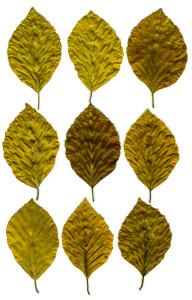 leaves-161121