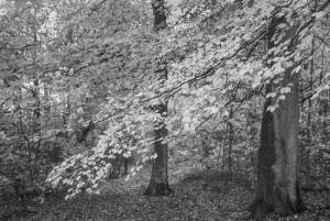 beechwoods-161001-22