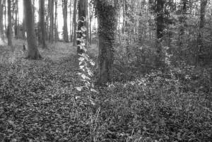 beechwoods-161001-34