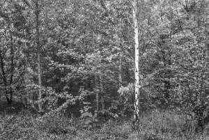 beechwoods-161001-9