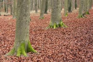 beechwoods-161203-2